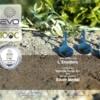 testsieger olivenöl bei evo silber